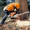 Профессиональная обрезка и валка деревьев!!