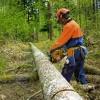 Обрезка, порезка деревьев. Расчистка территории