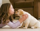 Собака: почему стоит ее завести?