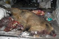 Браконьєр з Вінниччини застрілив двох диких свиней. За дичиною відправився у сусідню область (Фото)