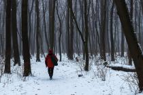 """Історичний парк на Вінниччині """"збідніє"""" на 217 дерев (Фото)"""