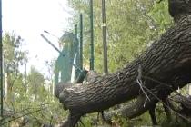 У Вінниці 13-річний школяр ледь не помер під час уроку фізкультури. На учня впало велетенське дерево (Відео)