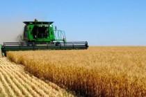 На Вінниччині зібрано перший мільйон тонн зерна нового врожаю