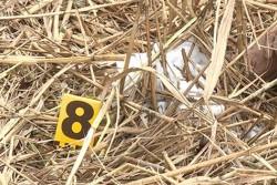 На Вінниччині чоловік вбив пенсіонера, а труп заховав у очереті (Фото)