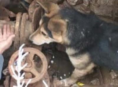 На Київській із каналізаційного колодязя врятували собаку