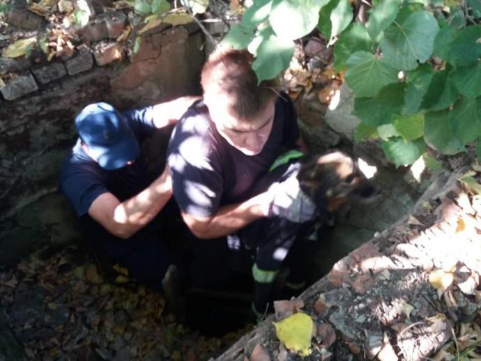 На Вінниччині рятувальники діставали з пастки собаку (Фото)