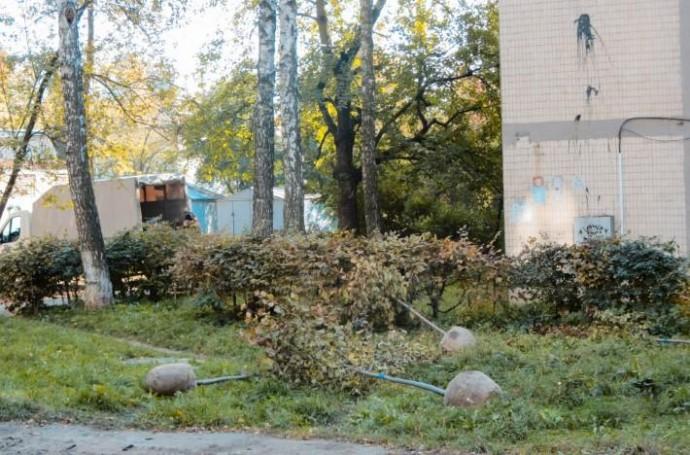 У Вінниці цієї осені висадять 1000 дерев