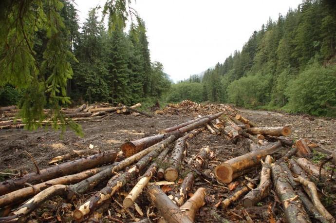 На Вінниччині затримали злочинців, що проводили нелегальні оборудки у сфері лісогосподарської діяльності