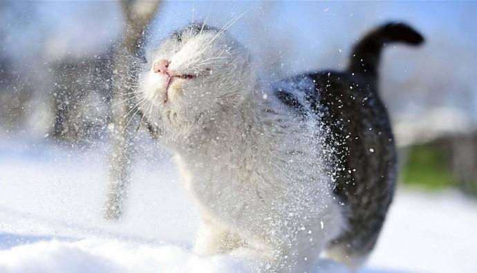 Зима повертається: на Вінниччині очікується сніг