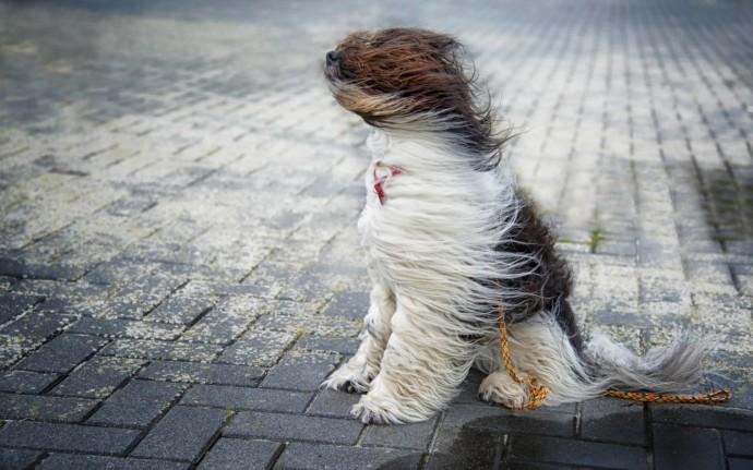 У Вінниці попереджають про посилення вітру