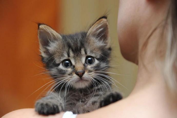 Как адаптировать котенка к новому дому: советы специалистов