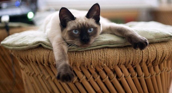 Названы болезни, которые может вылечить домашняя кошка