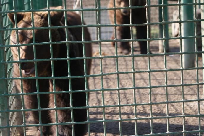 У Вінницькому зоопарку піднімають ціни на квитки
