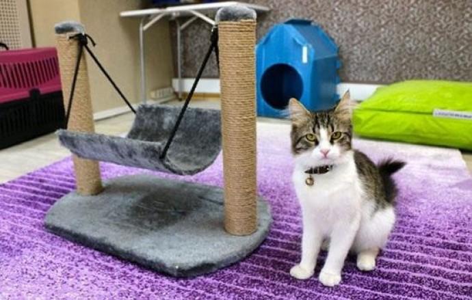 В Турции открыли пятизвездочный отель для кошек