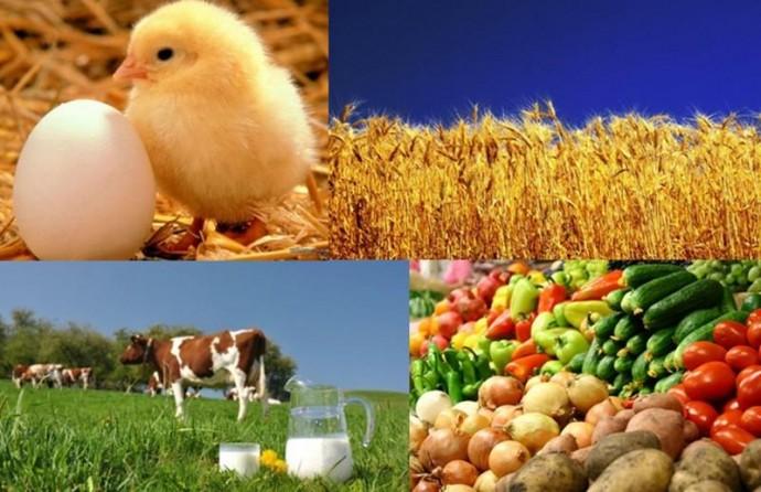 За 2019 рік Вінниччина посіла перше місце по обсягам виробництва сільгоспродукції