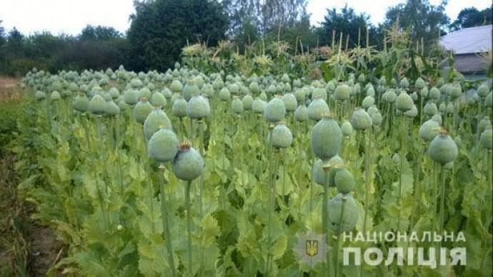 На Вінниччині у жителів області вилучили більше 9 тисяч рослин маку та конопель (Фото)
