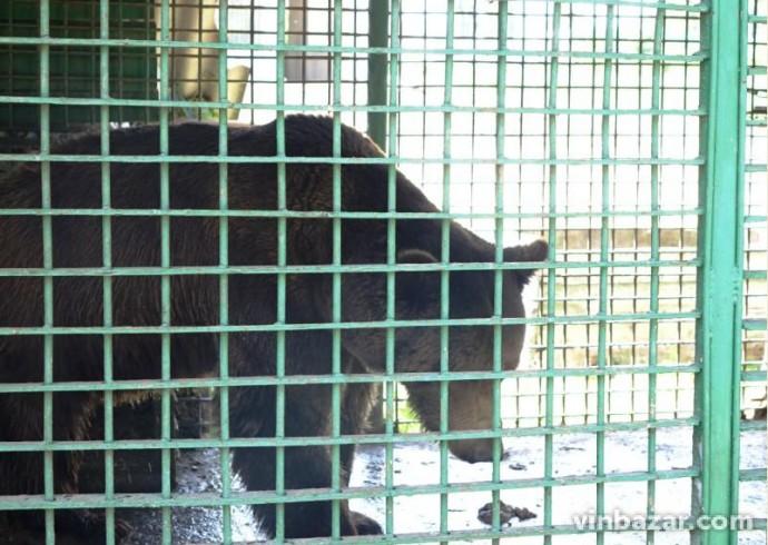 Між Вінницьким та Одеським зоопарками відбудеться обмін тваринами