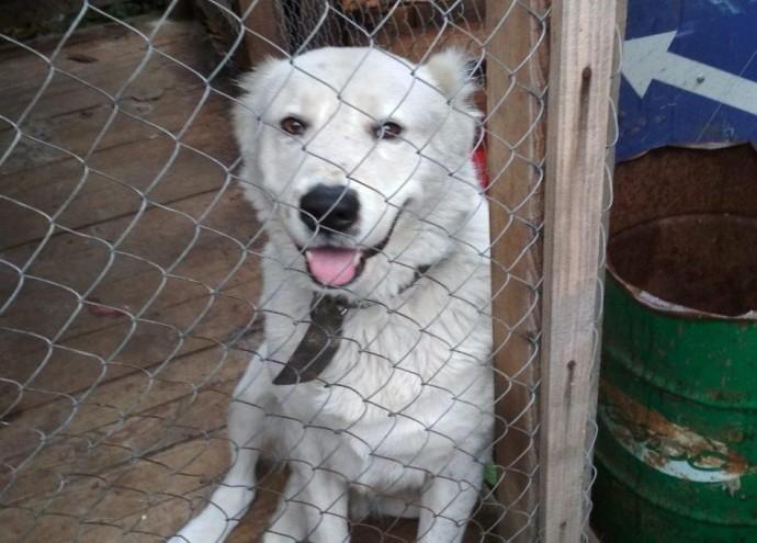 У Вінниці з території підприємства чоловік викрав сторожового пса