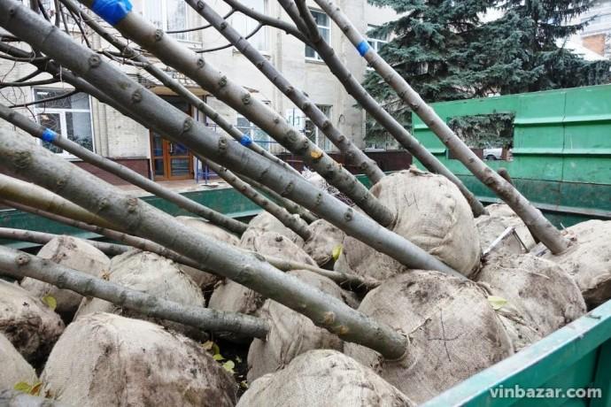 Екоакція у Вінниці: біля Вежі висадять нові дерева та закладуть