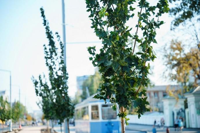 До кінця року у Вінниці висадять тисячу нових дерев