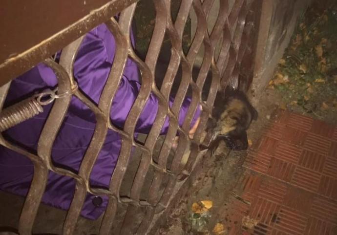 У Вінниці рятувальники звільнили собаку, яка застрягла головою в паркані (Фото)