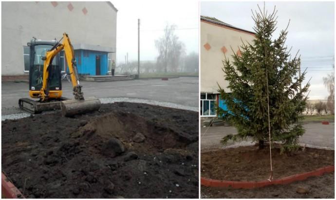 У центрі Могилівки висадили 5-метрову ялинку до Нового року (Фото)