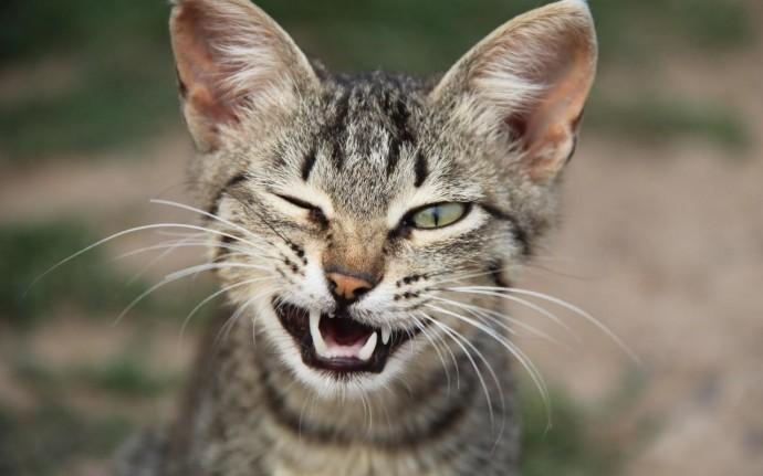Кошки обладают мимикой