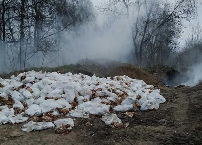 У Вінницькій області ліквідували птахів, хворих на пташиний грип (Фото)