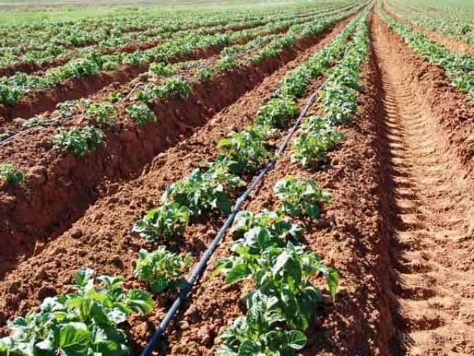 Які добрива для картоплі допоможуть підвищити врожайність