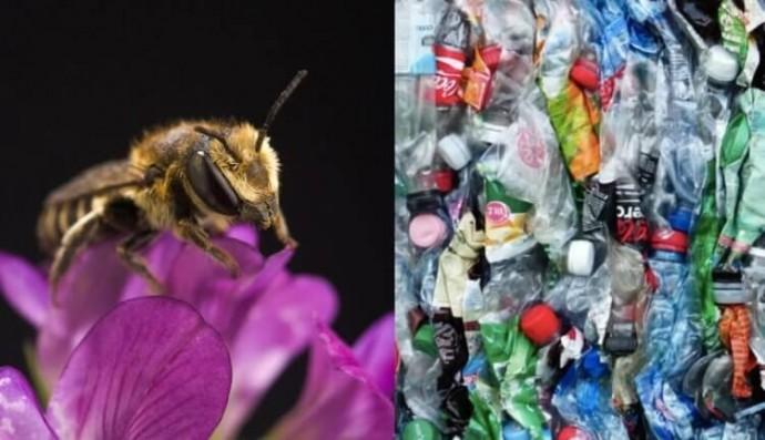 Бджоли почали будувати гнізда повністю з пластикових відходів