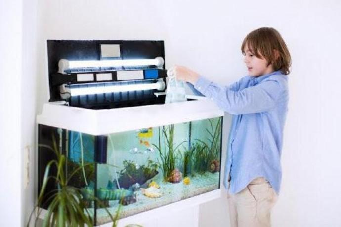 Уголок релакса: как ухаживать за рыбками в аквариуме