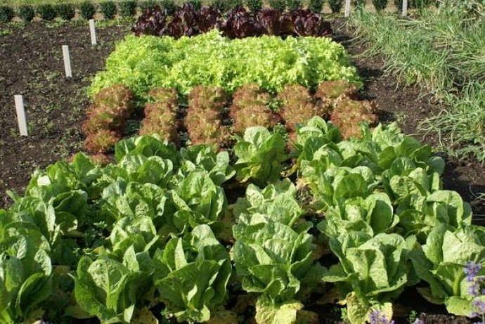 Запаси на зиму: что посадить на огороде?