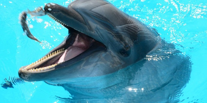 Дельфинов научили вытаскивать рыб из раковин