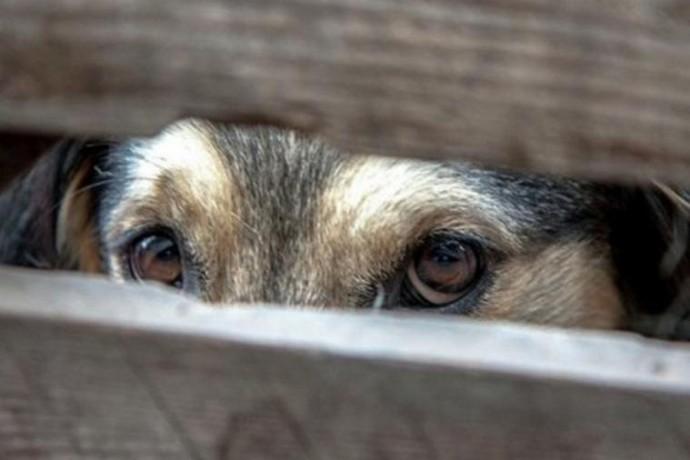 У Вінниці чоловік застрелив безпритульну собаку