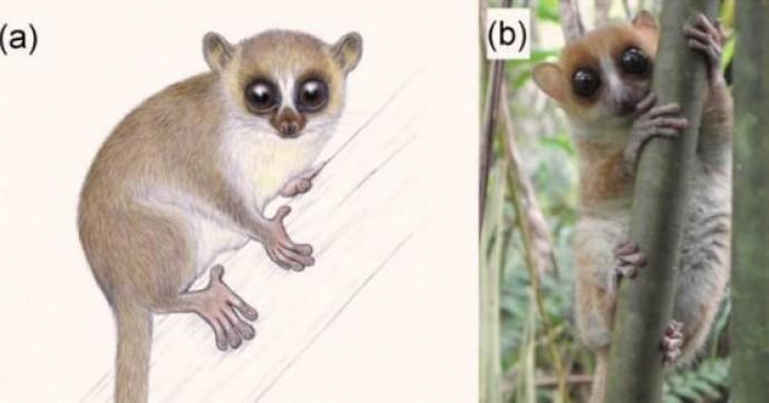 Ученые нашли новый вид животных - их размер не превышает 26 см