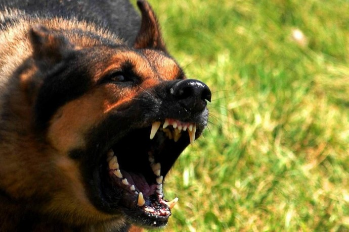 На П'ятничанах у домашнього пса виявили сказ. Покусав кілька людей