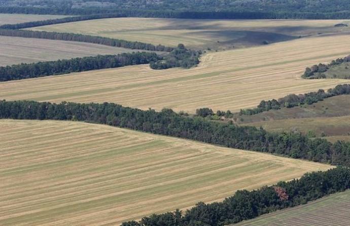 Лесополосы добавляют 20% к урожайности зерновых