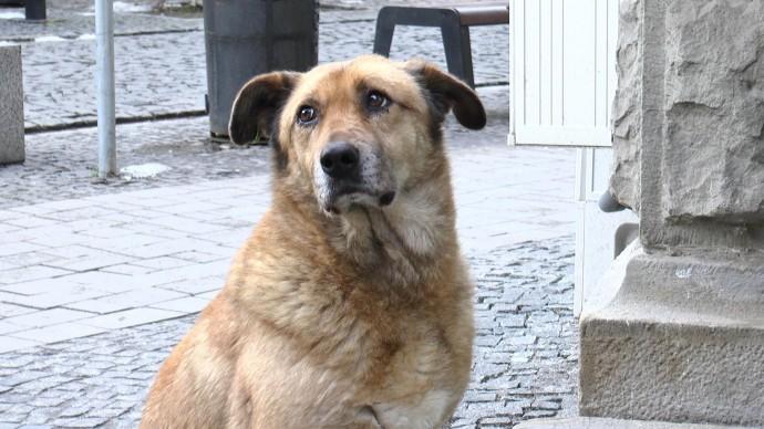 У центрі Вінниці отруїли собак. Поліція розпочала розслідування
