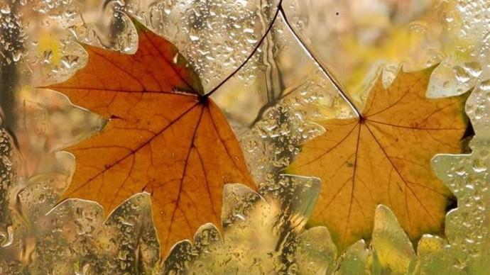 """На Вінниччині прогнозують """"осінню погоду"""" з вітром та заморозками"""
