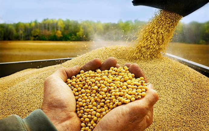Вінниччина посіла третє місце за врожайністю сільськогосподарської продукції у 2020 році