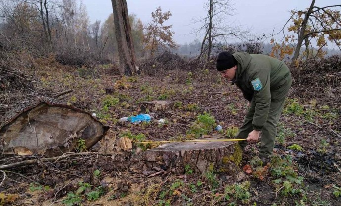 На Вінниччині зловмисники вирубали близько 800 дерев