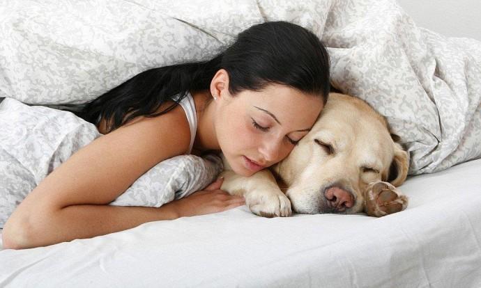 Чому не можна спати поруч з домашніми улюбленцями?