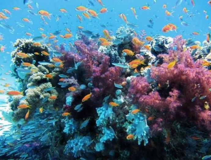 Завдяки відсутності туристів в тайські моря повертається життя: корали знову розрослися
