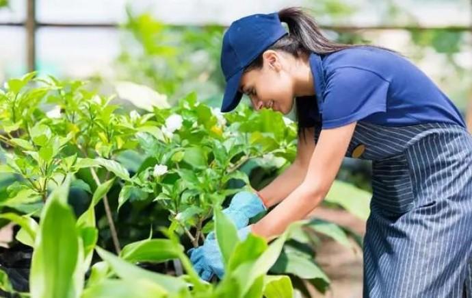 Аптека садівника - лише первірена якість і надійний захисник Вашорго саду та городу