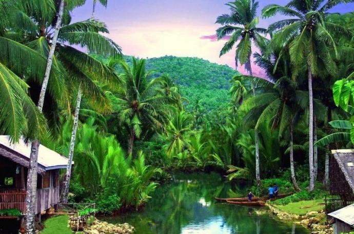 Стародавні тропічні ліси в 2020 році скоротилися на 4,2 мільйонів гектарів