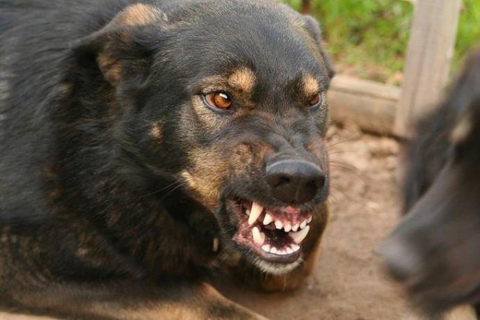 У Ладижині домашній пес зі сказом покусав господарів