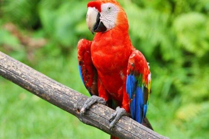Стародавні індіанці продавали папуг і робили з них мумії
