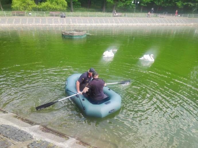 У Вінниці з металевої пастки врятували маленьке лебедя (Фото)