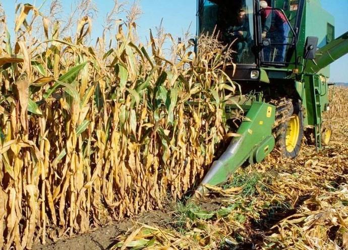 На Вінниччині приступили до збору кукурудзи