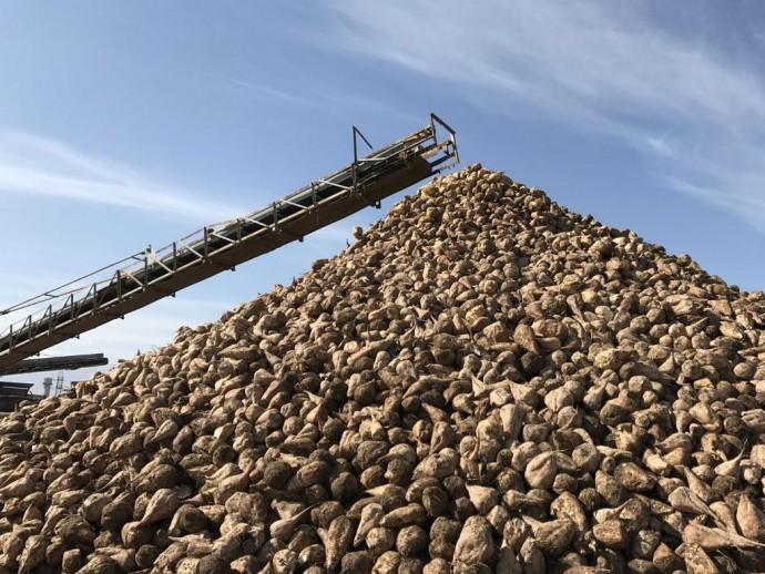 У Вінницькій області запрацювало 4 цукрових заводи